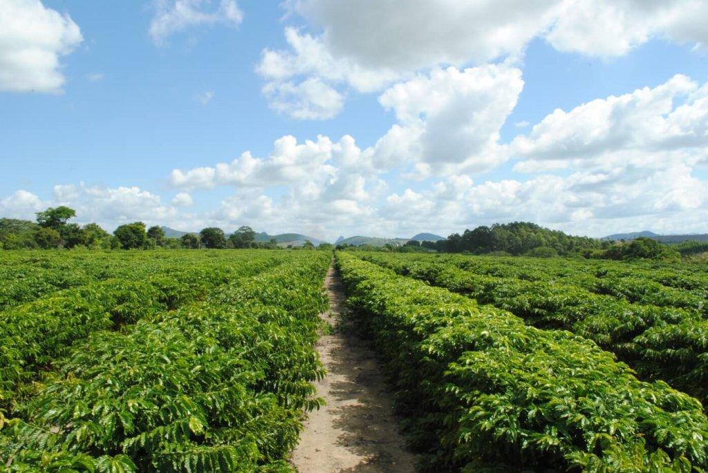 Irrigação adequada proporciona economia de água e melhora a qualidade do café
