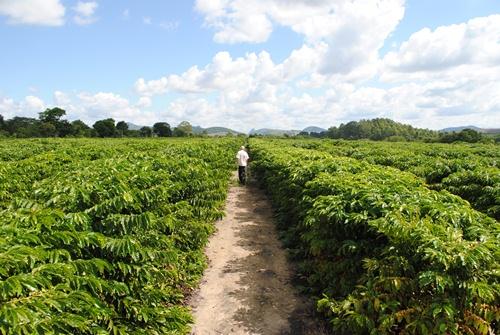 Tecnologia impulsiona crescimento do agronegócio
